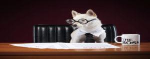Smart business dog